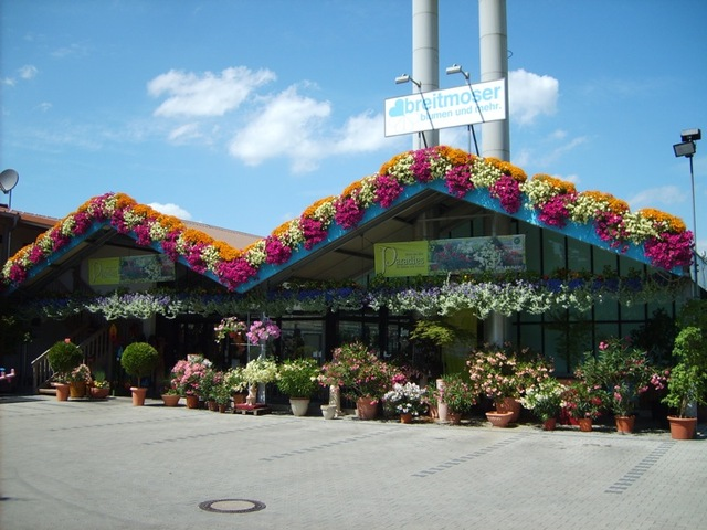 Blumen breitmoser